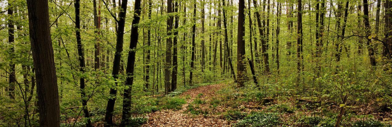 Hauptsmoorwald gerettet