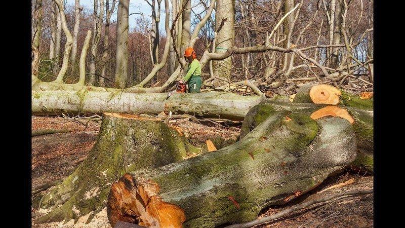 Petition für neues Waldgesetz