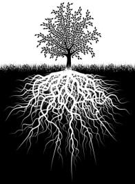 Boomwortels niet beschadigen