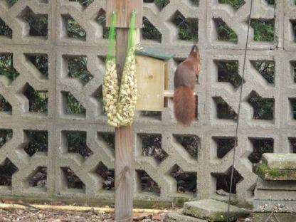 Eekhoorn Snackbar met knabbelende eekhoorn