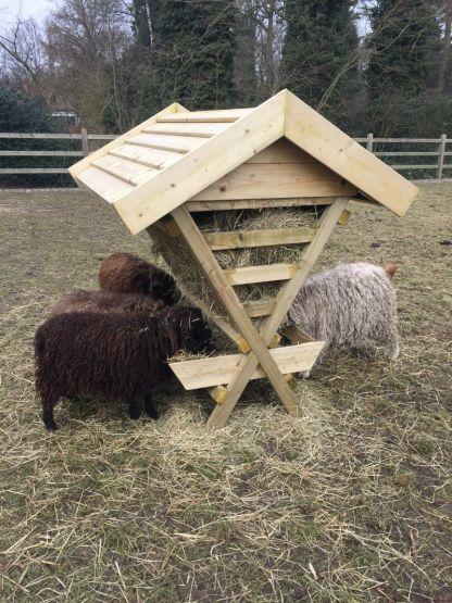 Hooiruif met schapen en geiten