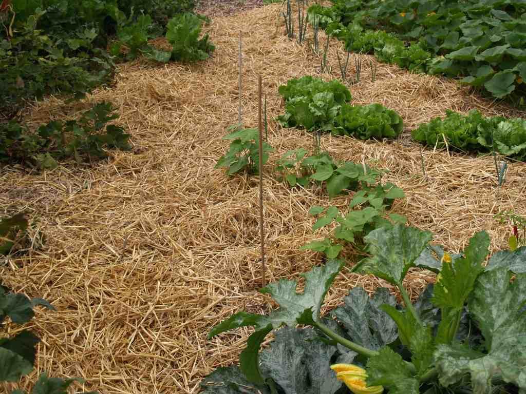 Tip 6: Mulchen is essentieel in de natuurlijke tuin