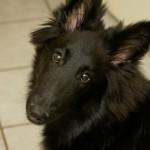 hond-03-03-10-M-1