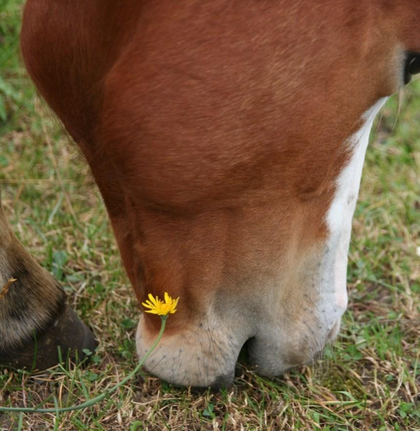 slokdarmverstopping bij paarden