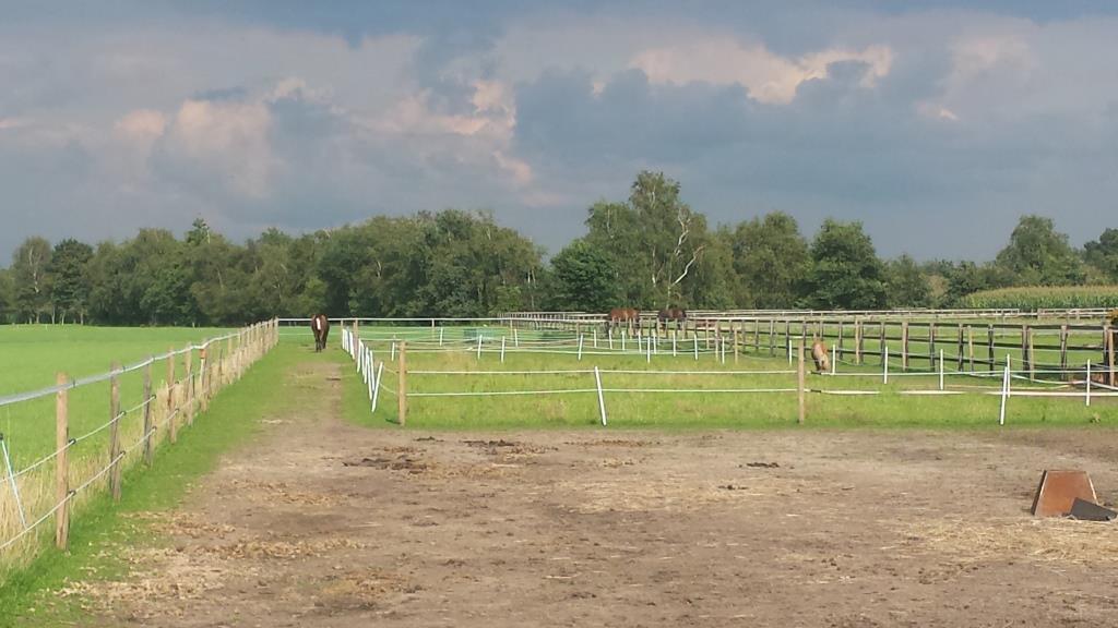 Paddock paradise ervaringen uit de praktijk natuurlijk for Paard aan huis te koop