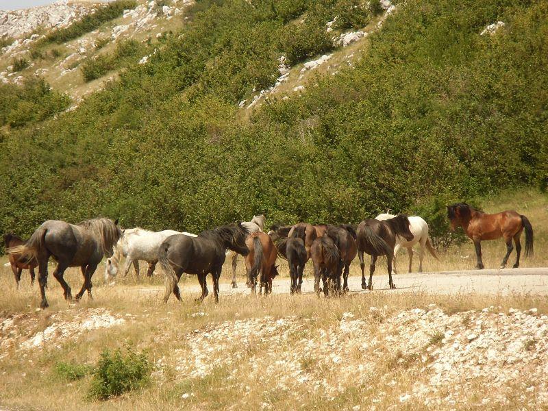epigenetica en paarden