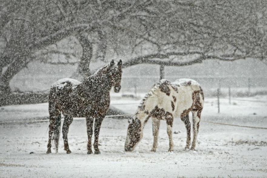 winterse voedingstips voor paarden