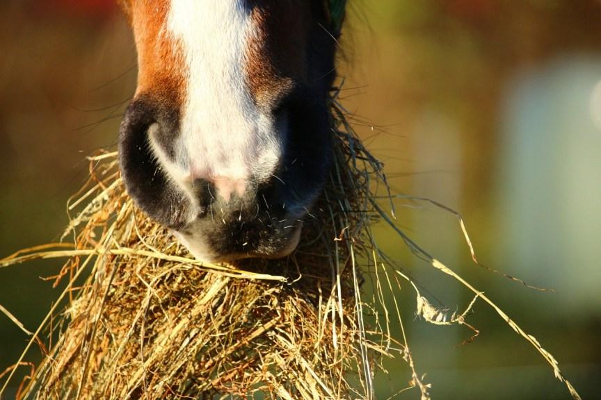 voer je paard preventief gezond