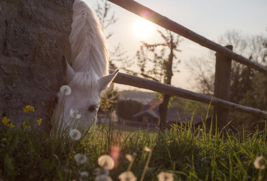 kunnen paarden zelf voedingsstoffen selecteren