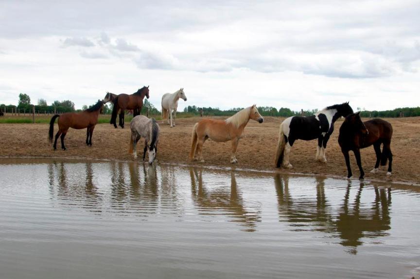 natuurlijk paarden