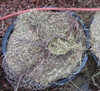 hooi weken schimmels in hooi
