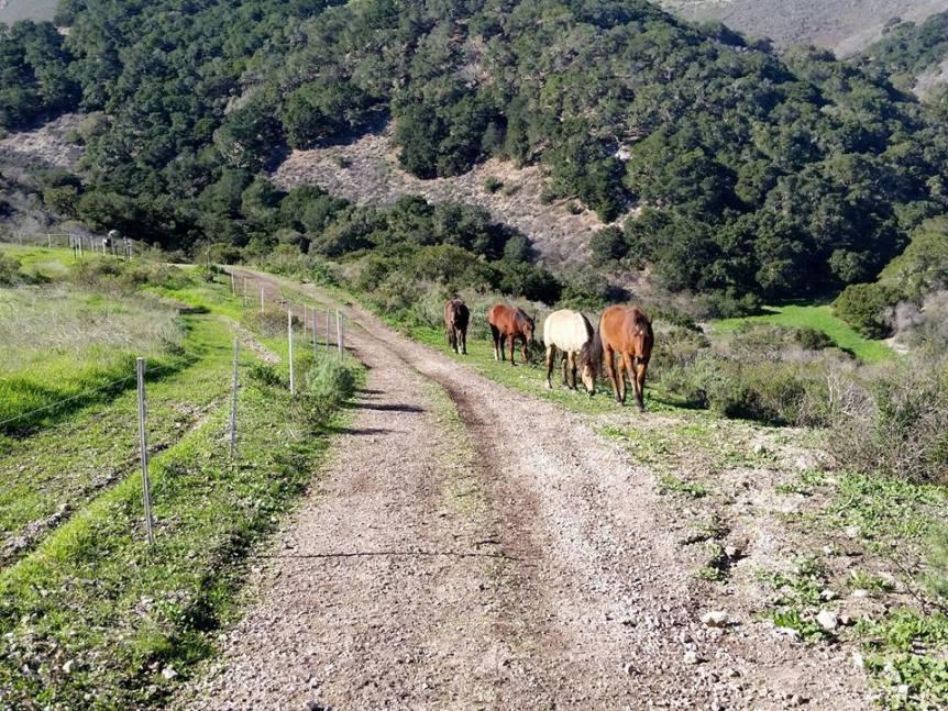 invloed beweging op hoeven paard