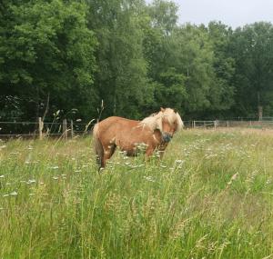zelfmedicatie door paarden