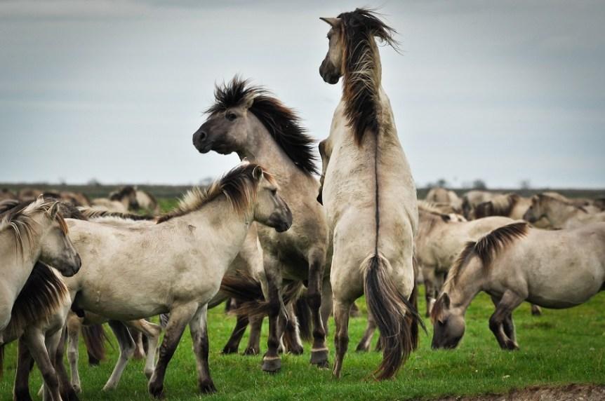 omgang communicatie paarden