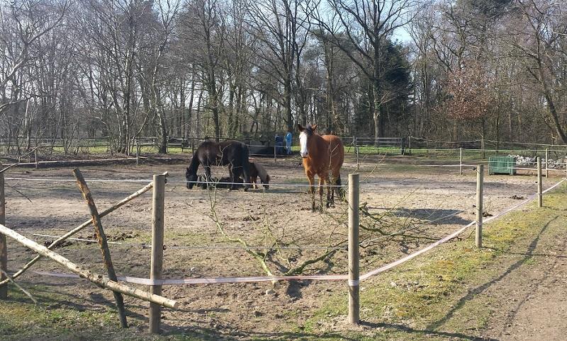 weide-onderhoud-haag-planten-paardenwei-2