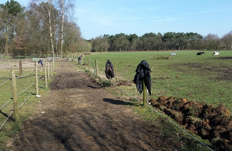 weide-onderhoud-haag-planten-paardenwei-6