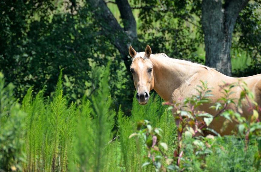 wat is natuurgeneeskunde paarden