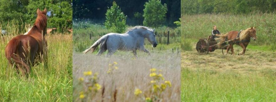 capg horses