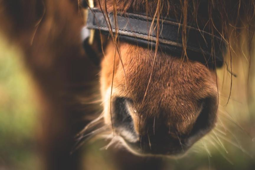 target training paarden