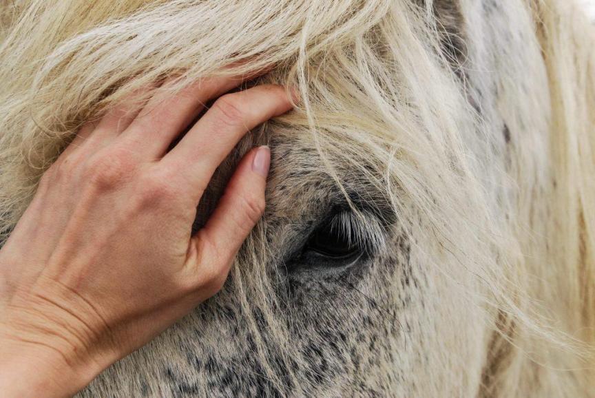 paard overprikkeld