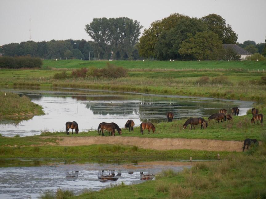 kudde in natuurgebied