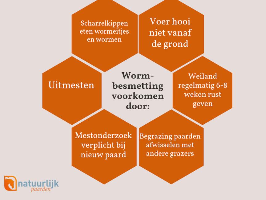 infographic preventie wormbesmetting