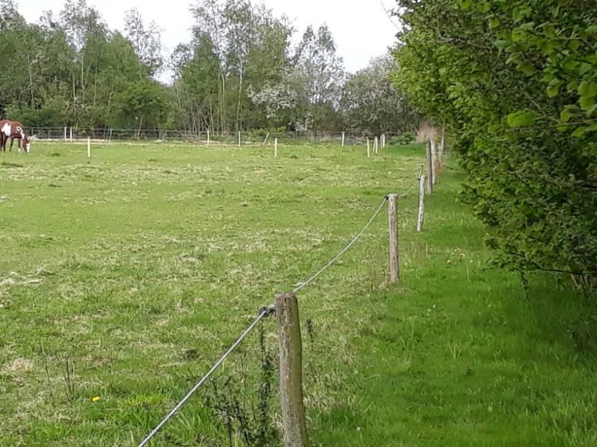 Eetbare planten voor paarden: hazelaars langs de paardenweide