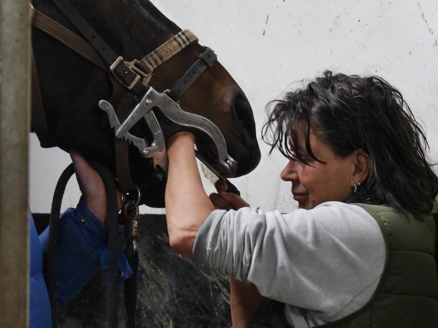 paardentandarts Inge van Soest van VivaDier