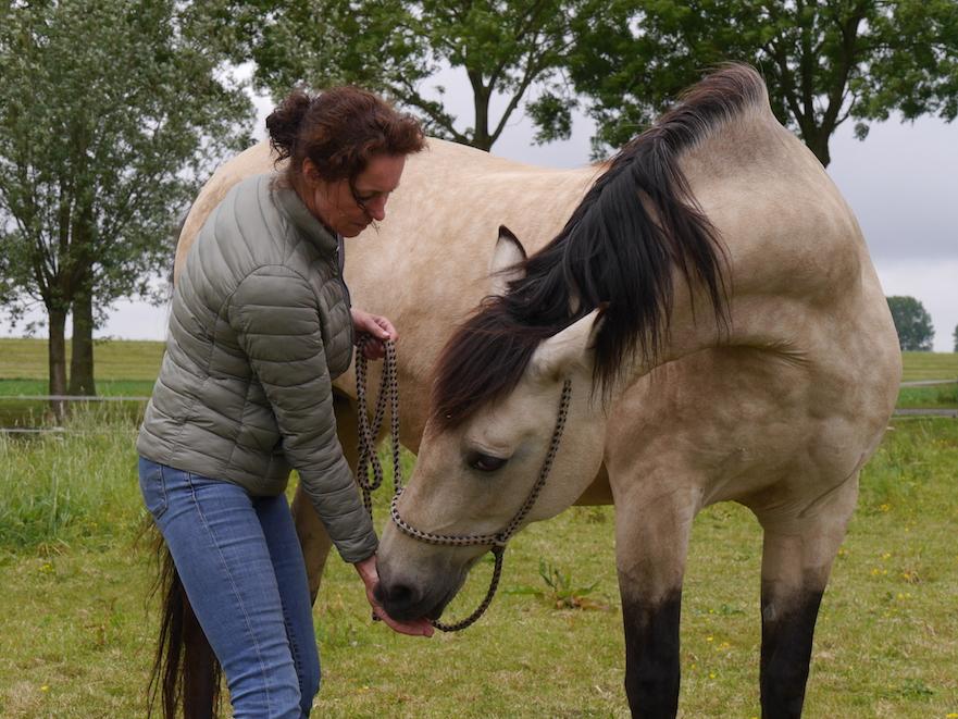 Stretching voor paarden oefening 2 zijwaartse buiging middenin de hals