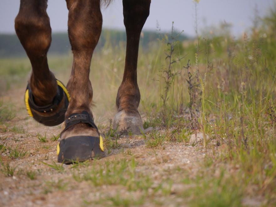 Flex hoof boot: de meest flexibele hoefschoen voor je paard
