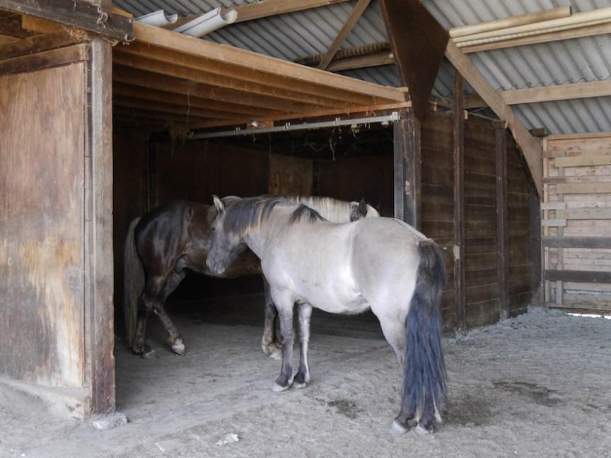 inloopstal biedt beschutting voor je paard tegen hitte