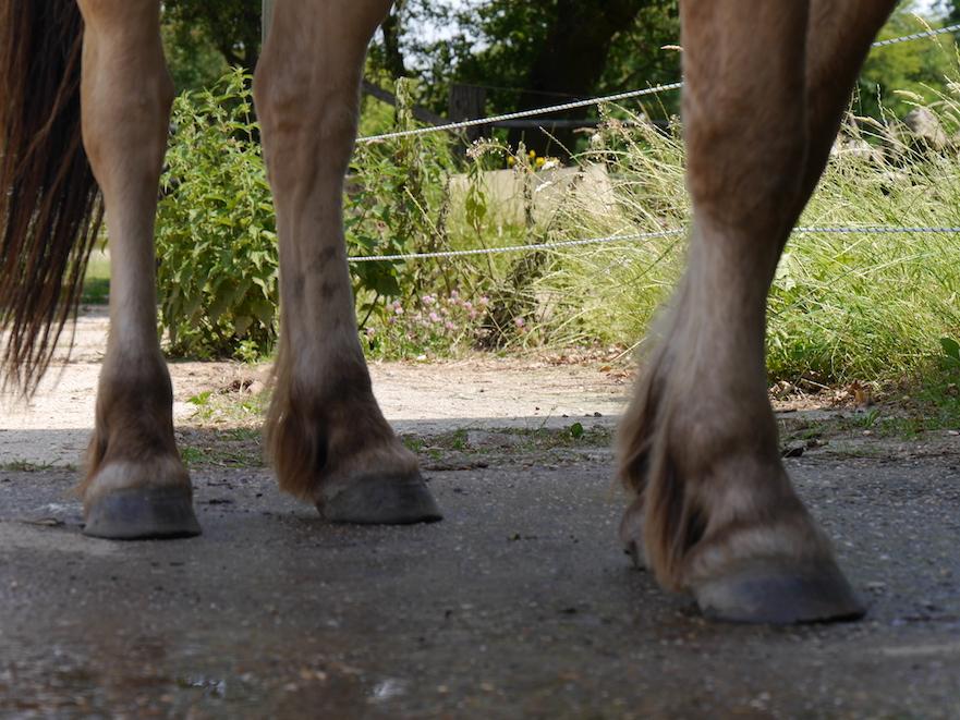 hitteplan voor je paard: hoefbevangen door heet zand