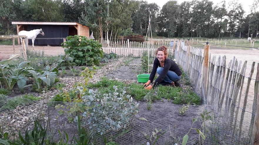 Zelf eetbare planten kweken voor je paard