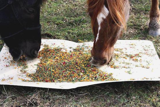 Verm-X wormkruiden voor paarden