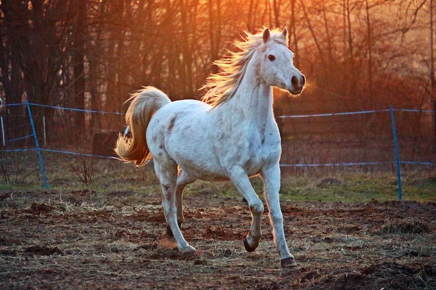 tips voor paarden met vuurwerkangst
