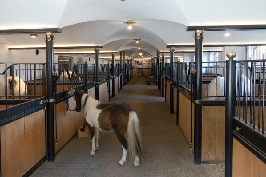 paard in box gedragsprobleem