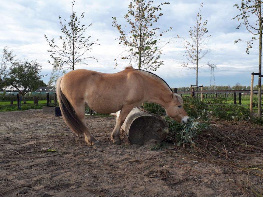 boomstam als verrijking van je paddock paradise