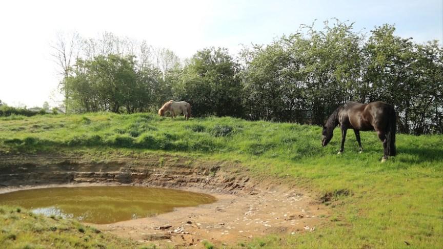 heuvel en poel in paddock paradise