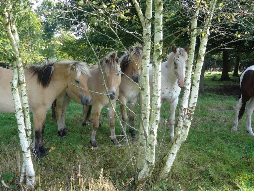 paardenplant bomen met geneeskrachtige werking