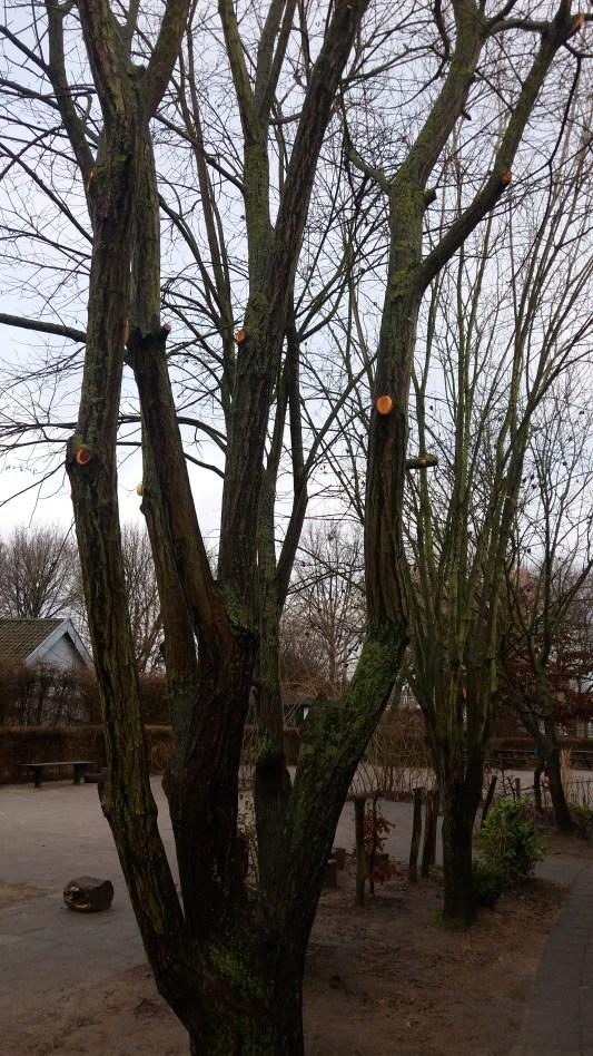 gesnoeide-bomen-2