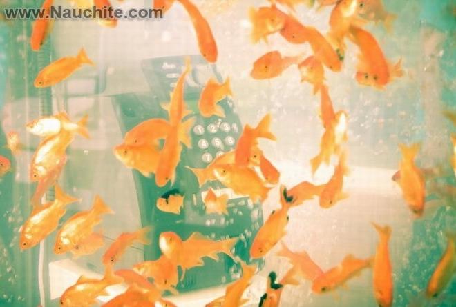 phone_booths_aquariums_03.jpg