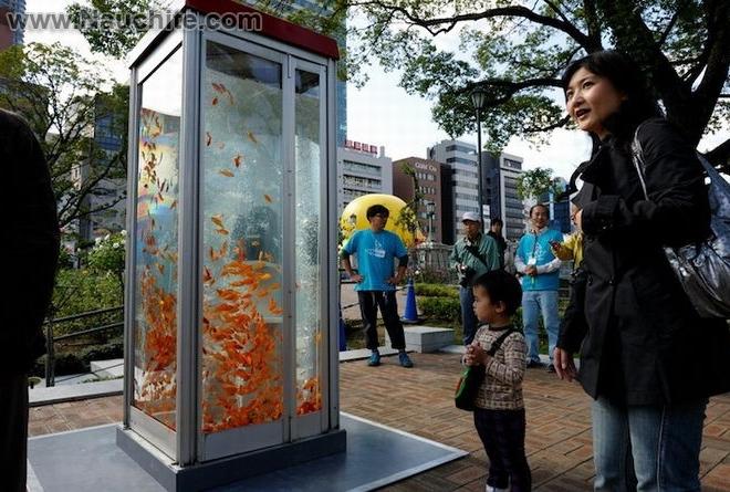 phone_booths_aquariums_04.jpg