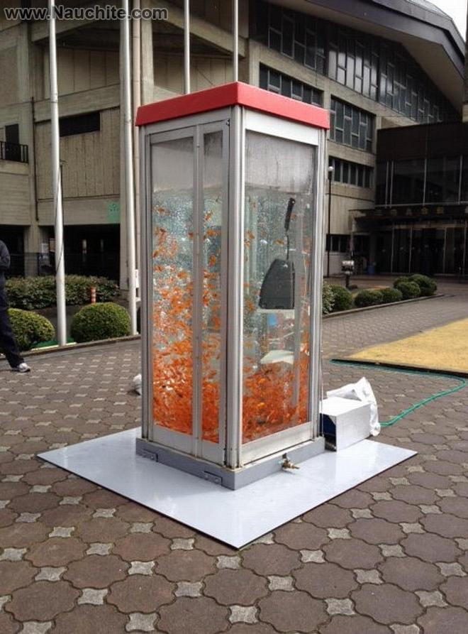 phone_booths_aquariums_13.jpg