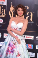 pranitha subhash hot at iifa awards 2017HAR_2544