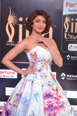 pranitha subhash hot at iifa awards 2017HAR_2588