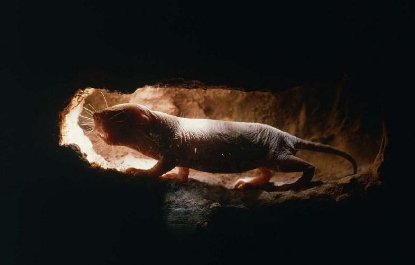 Самое удивительное с точки зрения старения и долголетия существо, живущее на Земле