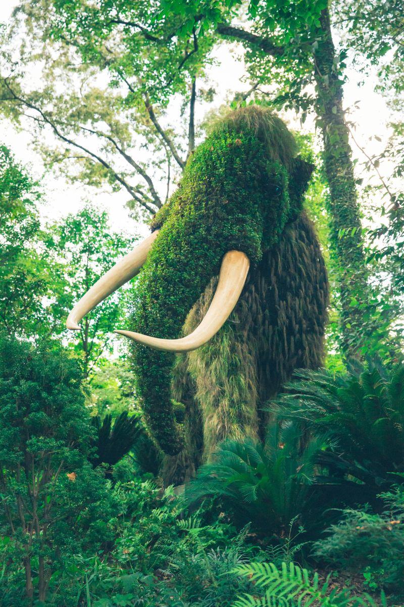 Mamut porośnięty trawą
