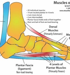 award winning touch for health instructor teaches foot pain elimination techniques [ 1200 x 677 Pixel ]