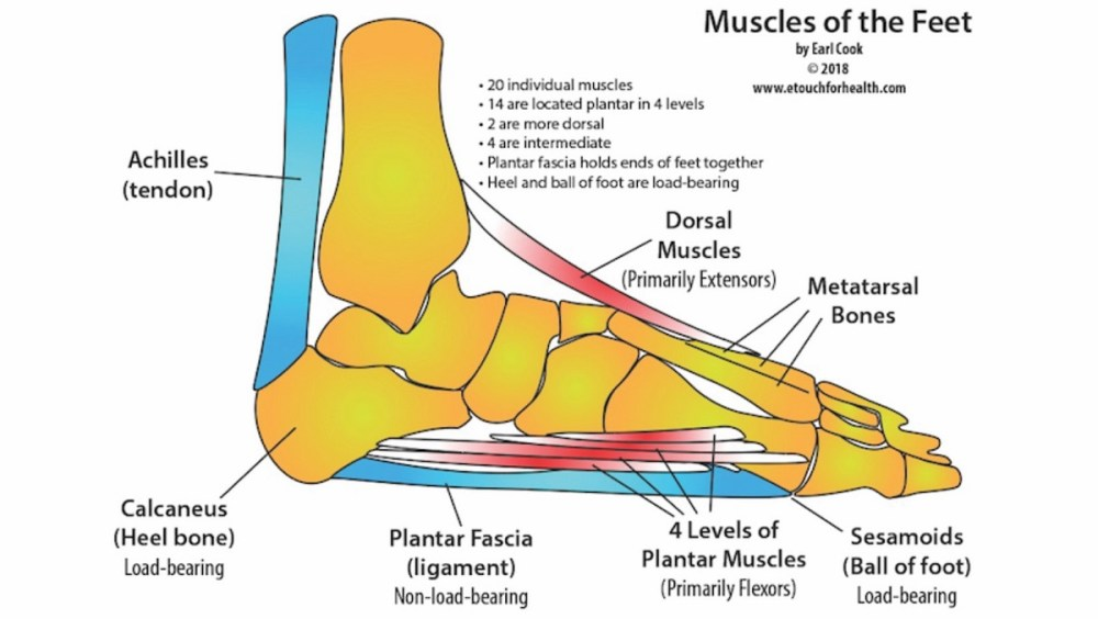 medium resolution of award winning touch for health instructor teaches foot pain elimination techniques