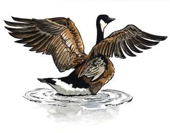 Goose_Web